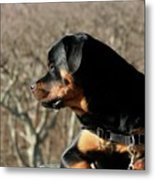 Rottie Profile Metal Print
