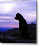 Rottweiler Sunrise 1 Metal Print