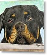 Rottweiler's Sweet Face 2 Metal Print by Megan Cohen