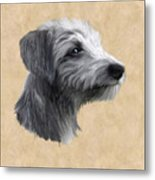 Rough Coated Lurcher  Metal Print