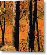 Round Valley State Park 3 Metal Print