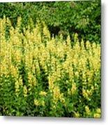 Row Of Yellow Flowers Metal Print