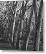 Row Trees Metal Print