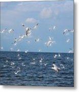 Royal Blue Ocean Tern Metal Print