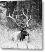 Royal Elk Metal Print