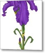 Royal Iris II Metal Print