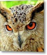 Royal Owl Metal Print