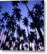Royal Palm Grove Metal Print