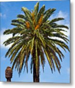 Royal Palm In Florida Metal Print