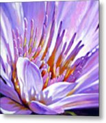 Royal Purple And Gold Metal Print
