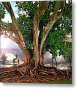 Rubber Tree Metal Print