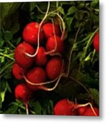 Rubies From The Field Metal Print