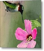 Ruby Breasted Humming Bird Metal Print