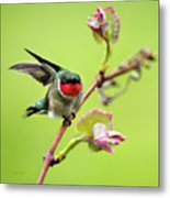 Ruby Garden Hummingbird Metal Print