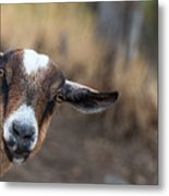 Ruby The Goat Metal Print