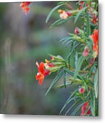 Ruby Throated Flowers Metal Print