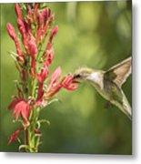Ruby Throated Hummingbird 2-2015 Metal Print