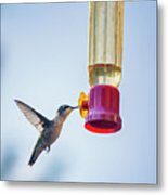 Ruby-throated Hummingbird 4 Metal Print