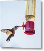 Ruby-throated Hummingbird 5 Metal Print