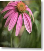 Rudbeckia Morning Metal Print
