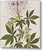 Ruff-necked Hummingbird Metal Print