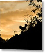 Ruffle Grouse Dusk Metal Print