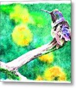 Ruffled Hummingbird - Digital Paint 5 Metal Print