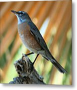 Rufous-backed Robin Metal Print
