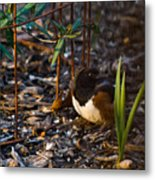 Rufous Sided Towhee At A Glance Metal Print