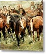 Running Free Horses IIi Metal Print