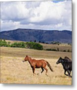Running Into The Wind Metal Print