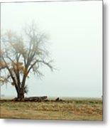 Rural Pasture And Tree Metal Print