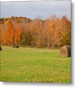Rural Scene Metal Print