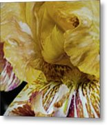 Russet And Umber Iris Metal Print
