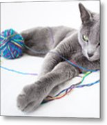 Russian Blue Metal Print