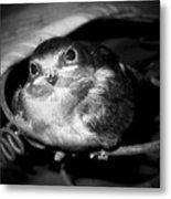 Rusted Perch - Baby Barn Swallow  Metal Print