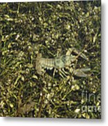 Rusty Crayfish At Night Metal Print