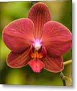 Rusty Orchid Metal Print