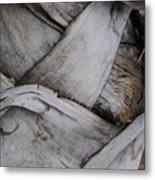 Sabel Palm 2 Metal Print