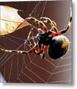 Sac Spider Catches A Leaf Metal Print