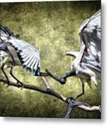 Sacred Ibis Photobombing Metal Print