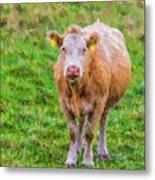 Sad Cow - Painterly Metal Print