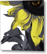 Sad Sunflower Metal Print