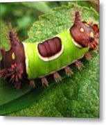 Saddleback Caterpillar Metal Print