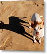 Sadie And Her Shadow Metal Print
