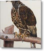 Safari Hawk Metal Print