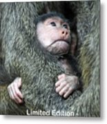 Safe In Mother's Arms Metal Print