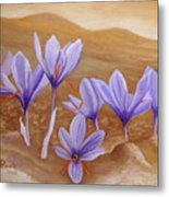 Saffron Flowers Metal Print