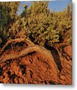 Sagebrush At Sunset Metal Print