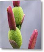Saging-saging Flower Buds Macro Metal Print